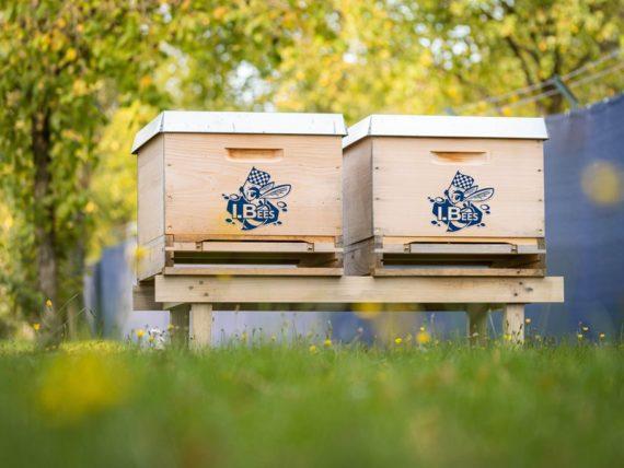 I.Bees